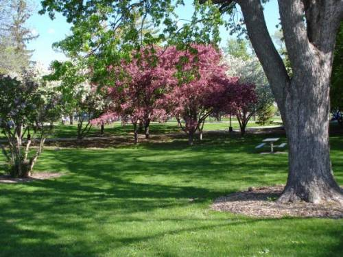 A beautifully landscaped campus